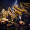 Alytaus miesto teatro spektaklis vaikams Kupriukas muzikantas © D.Matvejev